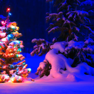 snowy christmas tree lights wide