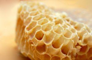 Včela 1